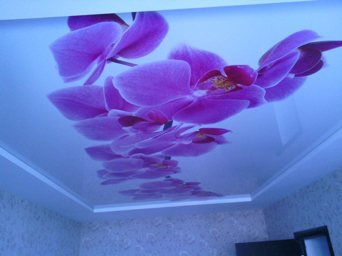 Фото натяжных потолковпечатью цветы